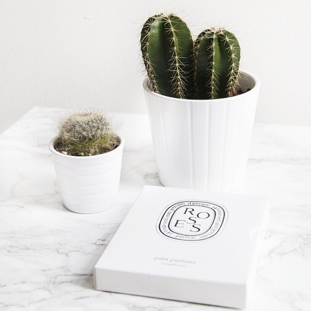 Benieuwd hoe je zulke mooie witte foto's krijgt? Je leest er alles over op de blog! Link in bio #followfashion #interior #photography #cactus #interiordesign #photooftheday