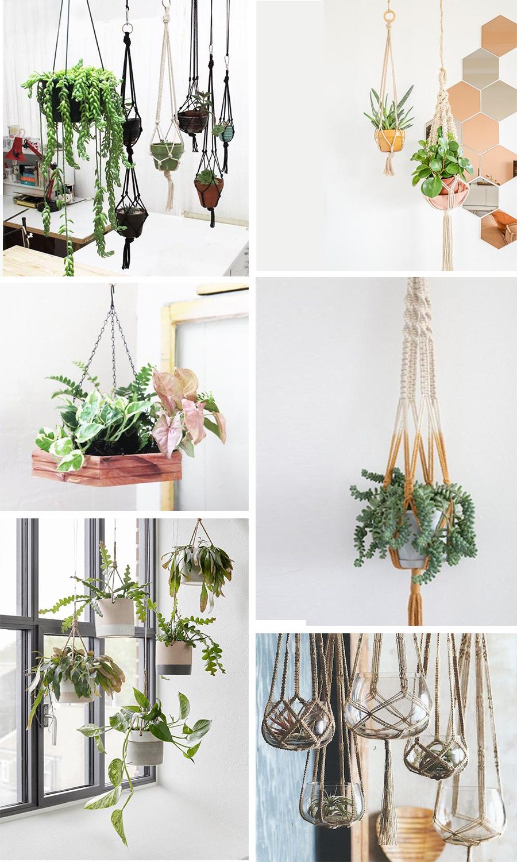 hanging-plants-moodboard