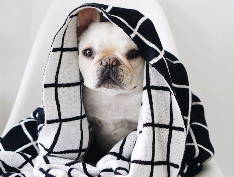 leukste honden op instagram