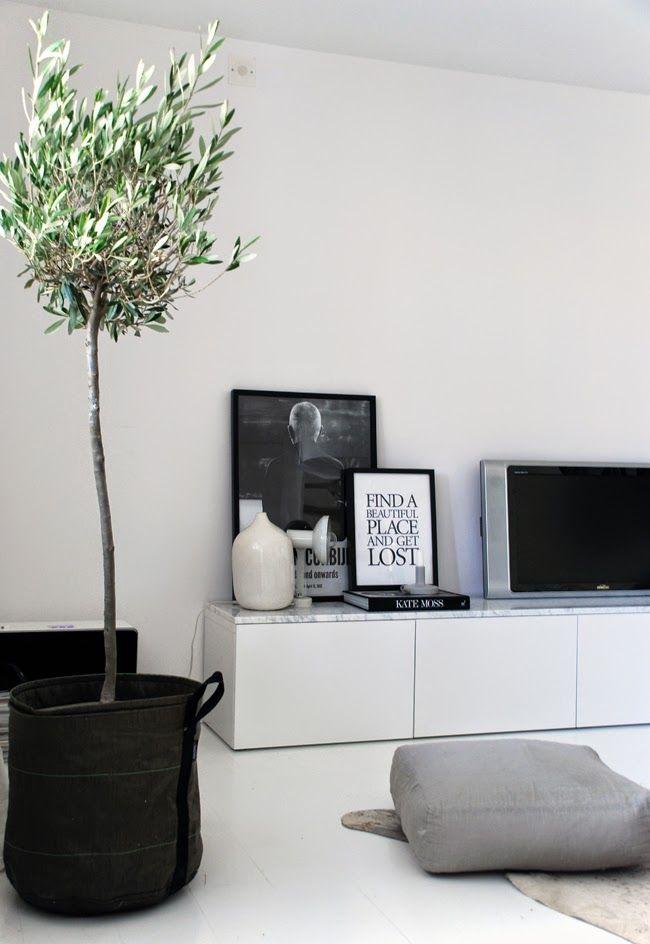bomen-in-huis-6