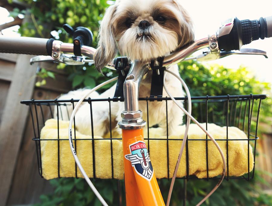 fitjournaal sporten met je hond