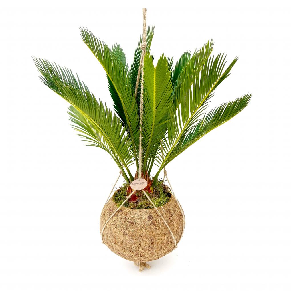 kamerplanten hangplant