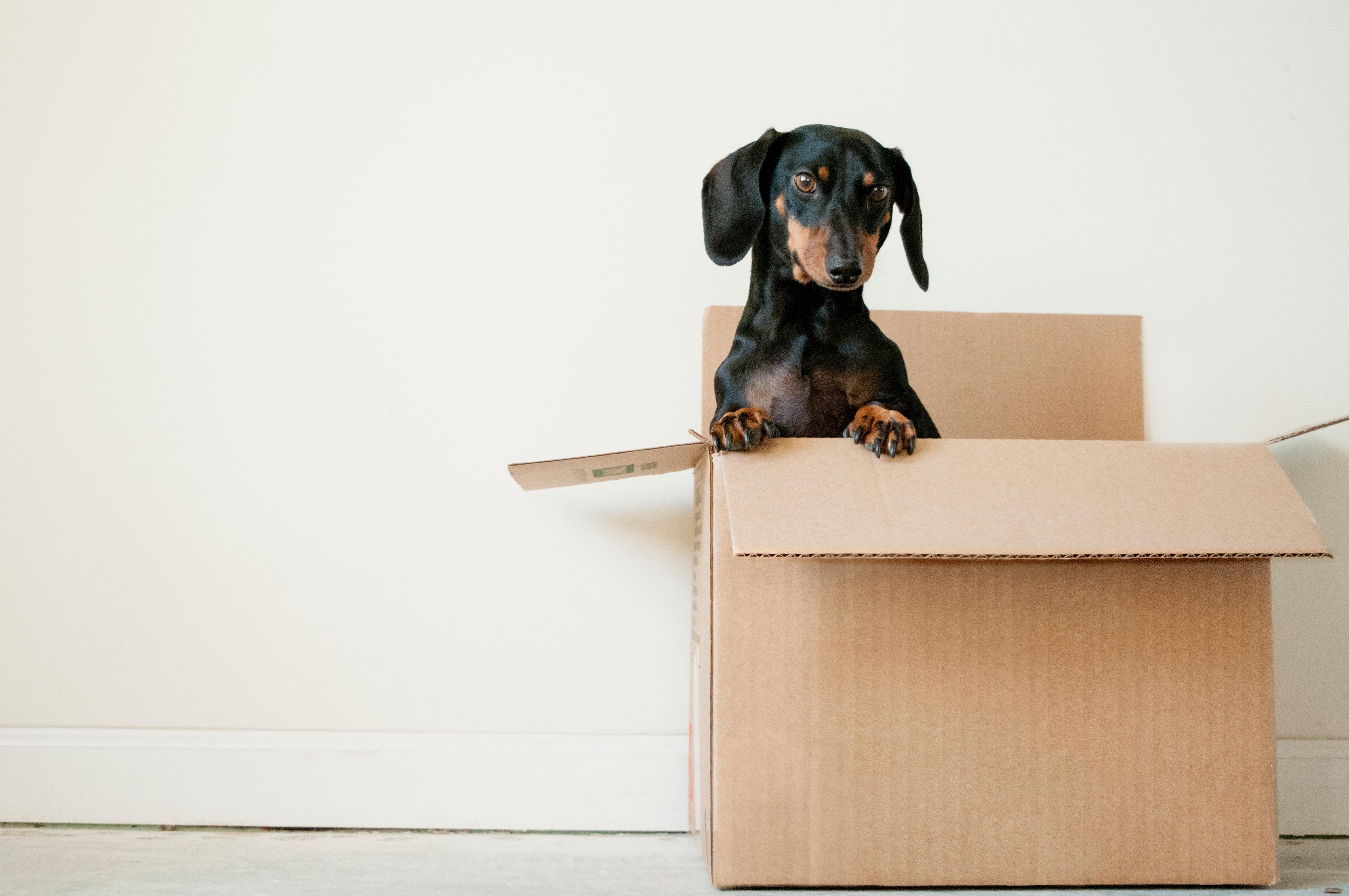 verhuizen zonder stress dozen